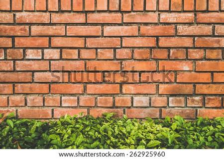 Brick texture and bush background - stock photo