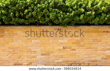 Brick wall and plant background