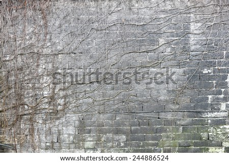 Brick wall background with withered creeper plant