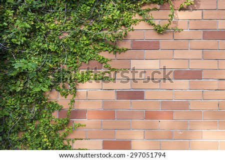 Brick wall climbing plants
