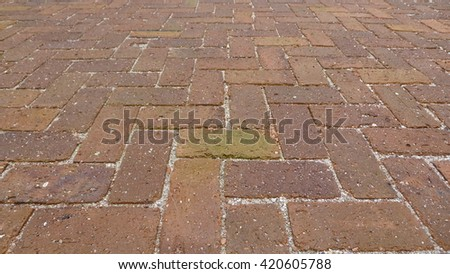 Bricks Floor with Fungal in Tropical country, close-up texture - stock photo