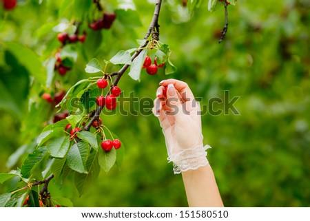 Bride hand with cherries - stock photo