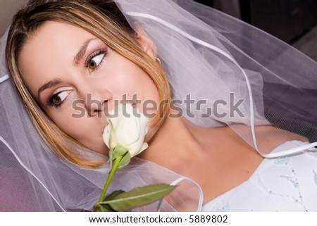 bride & white rose - stock photo
