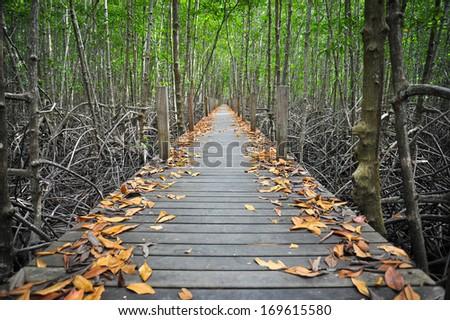 Bridge Forest - stock photo