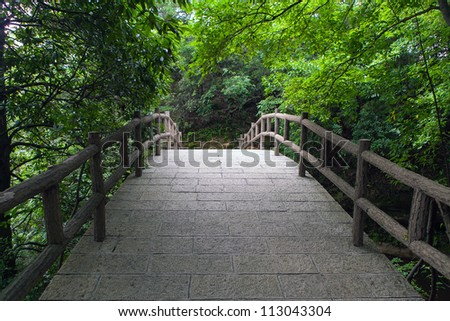 Bridge in the forest