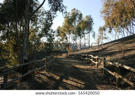 Bridle trail through a grove of eucalyptus trees in Orange County, California at dusk - stock photo