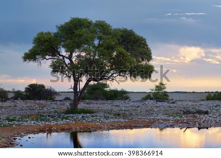 Bright African night. Acacia tree silhouette on the waterhole shore against a bright sunset sky. Namibia - stock photo