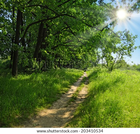 Bright afternoon sun on a blue cloudless sky shines through the leaves of high trees branches narrow path leading along the edge of the forest - stock photo