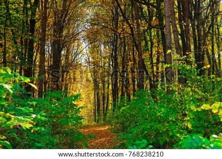 Bright and colorful landscape of autumn forest trail covered with leaf.