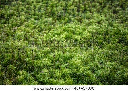 Bright and fluffy green moss, summer in Iceland. Useful for your posters, design projects, etc.
