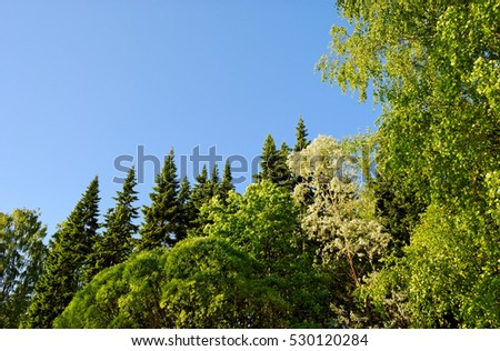 bright and fresh spring foliage