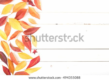 Bright and Pretty Fall Display of Colorful Ash Leaves in Natural Tones on side for a Thanksgiving or Halloween Card on Rustic White Board Background with room or space for copy, text, or your words