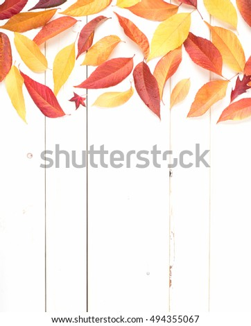 Bright and Pretty Fall Display of Colorful Ash Leaves in Natural Tones on top for a Thanksgiving or Halloween Card on Rustic White Board Background with room or space for copy, text, or your words