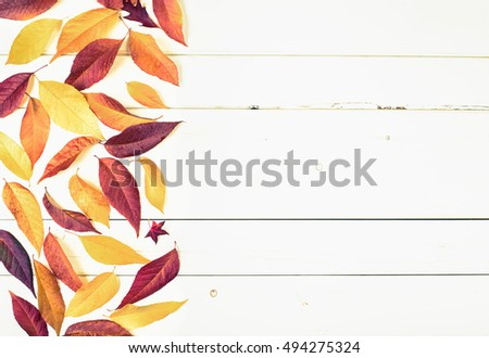 Bright and Pretty Fall Display of Colorful Ash Leaves on side for a Thanksgiving or Halloween Card on Rustic White Board Background with room or space for copy, text, or your words and Cross Processed