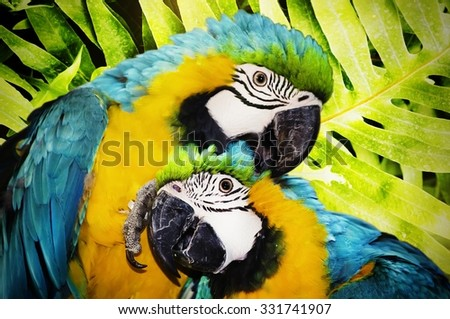 Bright Ara Parrot Partrait