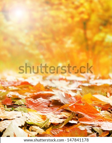 Bright autumn background made of autumn leaves and the blurred park - stock photo