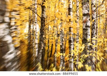 Bright autumn background. Selective focus - stock photo
