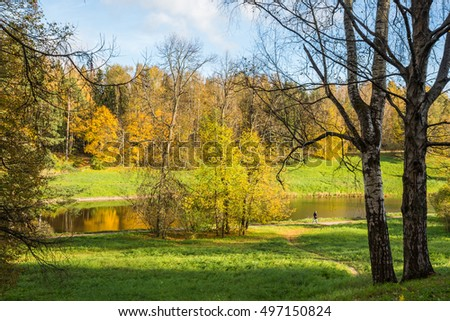 Bright autumn landscape Leningrad Region Russian nature with yellow leaves on the trees and falling leaves.