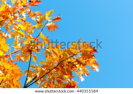 bright autumn leaves against the blue sky - stock photo