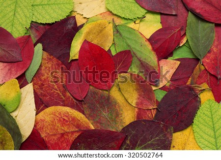 Bright autumn leaves, background with autumn colors. Pressed leaves background, herbarium - stock photo