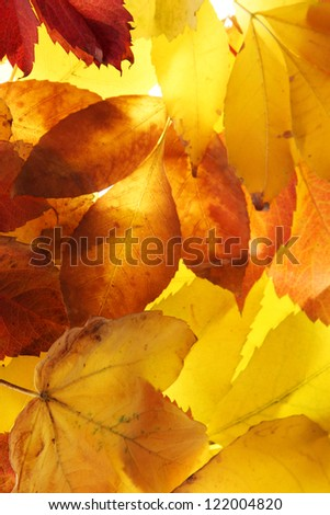 bright autumn leaves, close up - stock photo