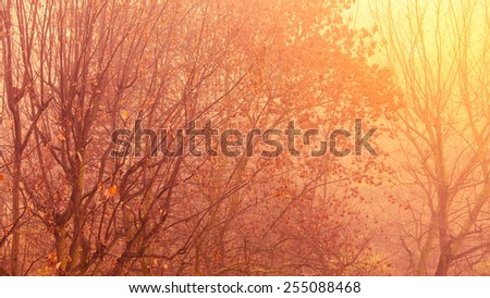 Bright autumn leaves fall trees in forest, yellow orange nature background. Foggy day - stock photo