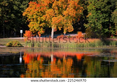 Bright autumn tree reflections in the lake