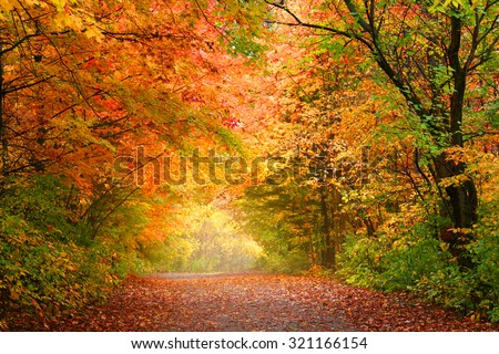 Bright autumn trees in Allegheny national forest - stock photo