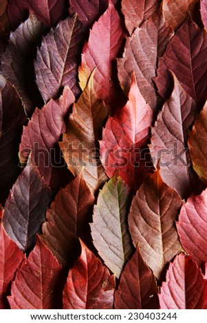 Bright background made of autumn leaves  - stock photo