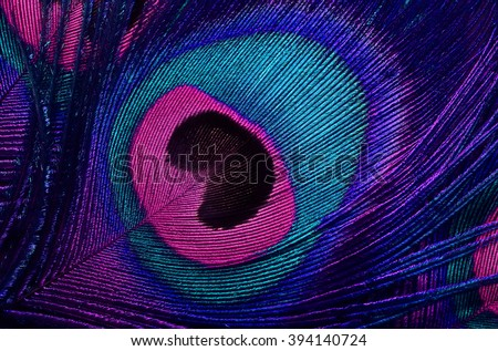 bright background the pattern of a peacock's tail - stock photo