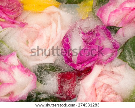 bright beautiful abstraction of organic aromatic bouquet of roses, frozen water, and a lot of air bubbles