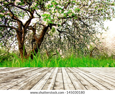 Bright beautiful light blooming rural apple trees alley in sunny spring park over blue sky with first dawn rays on the wall inside room interior with frame textured wooden panel floor background - stock photo