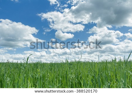 Bright blue cloudy heaven above farm green oat and pea field - stock photo