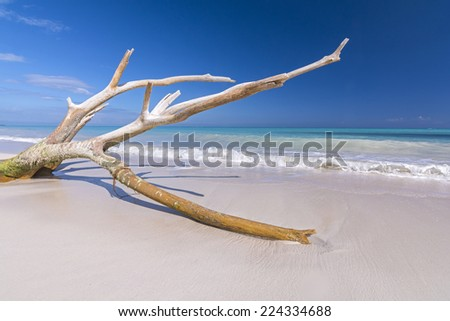 Bright blue sky and large branch of tree washed up on beautiful tropical Caribbean beach of Isla Blanca near Cancun, Mexico - stock photo