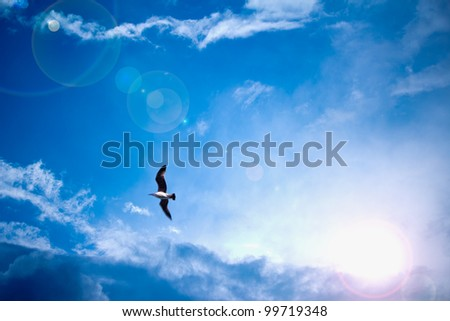 Bright blue sky and sun light rays looking serene with bird stock