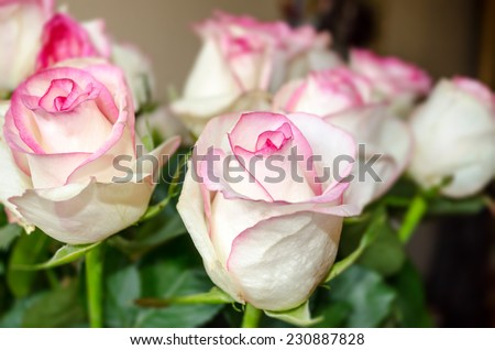 bright bouquet of beautiful white-pink roses.  - stock photo