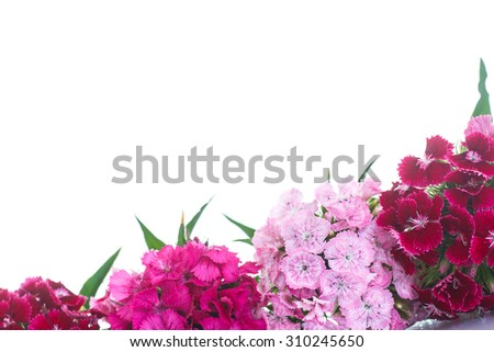 bright bouquet of carnations on a white background - stock photo