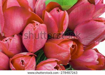 bright bouquet of red tulips