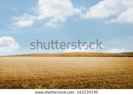 Bright brown landscape