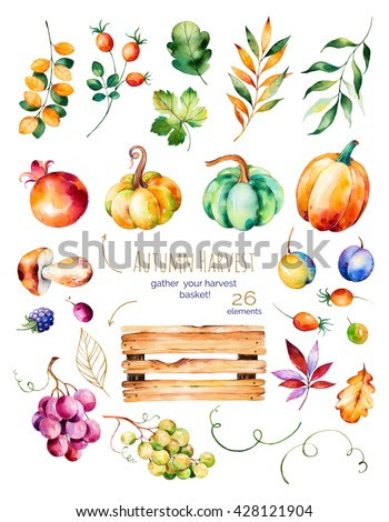 Bright collection with fall leaves,branches,wooden basket,pomegranate,mushroom,pumpkins,grapes vine,prunes and more.Colorful autumn collection with 26 watercolor elements.Gather your harvest basket! - stock photo