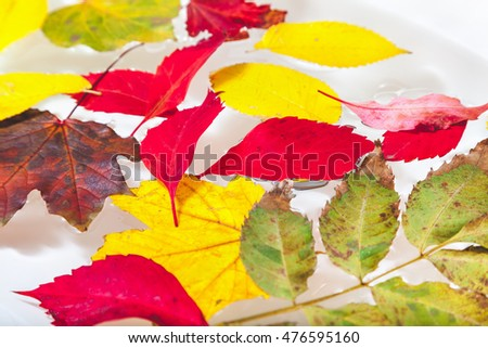 Bright colored fallen leaves of different trees, picturesque swim in the clear water