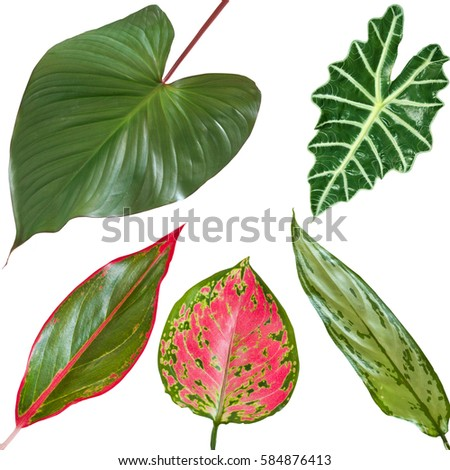 bright colored tropical leaves on a white background