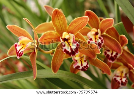 wild orchid stock images, royaltyfree images  vectors  shutterstock, Beautiful flower