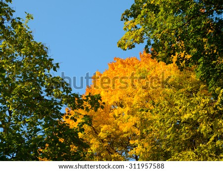 Bright Colorful Autumn Leafs on the Tree over Deep Blue Sky - stock photo