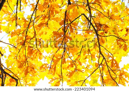 Bright colorful leaves on the  branches in the autumn forest. - stock photo
