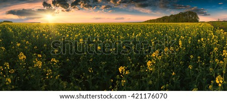 Bright colorful sunset in a canola field. Panorama. Ukraine, Europe - stock photo