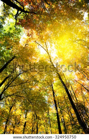 Bright colors of autumn forest