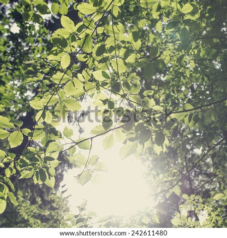 Bright ethereal spring leaves background with a misty sun flare giving a faded vintage effect. - stock photo