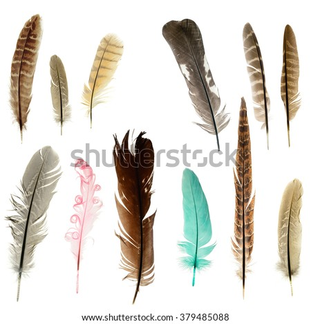 Bright feathers background - stock photo