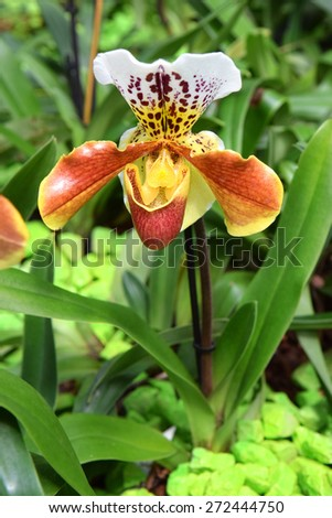 bright flower of orchid-predator, orchid that feeds on insects - stock photo